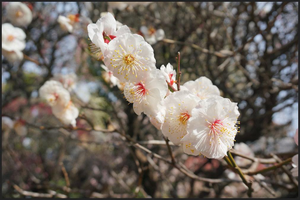 小村井 香取神社・香梅園_b0340572_13060853.jpg