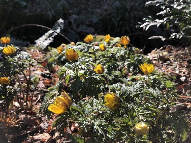 梅の香りにVEB Tonmechanik Again_f0068878_16525965.jpg
