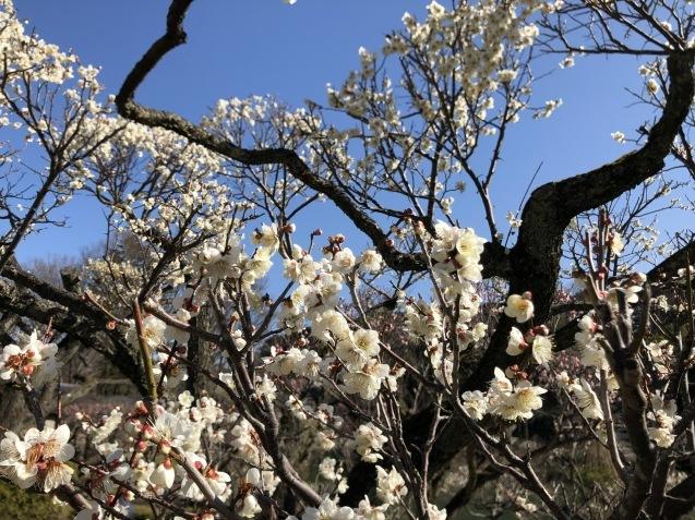 梅の香りにVEB Tonmechanik Again_f0068878_16530040.jpg
