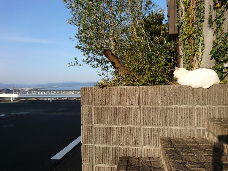 夕方4:45の猫さんたち_f0197985_22172413.jpg