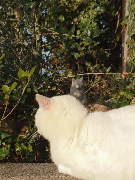 夕方4:45の猫さんたち_f0197985_22190115.jpg