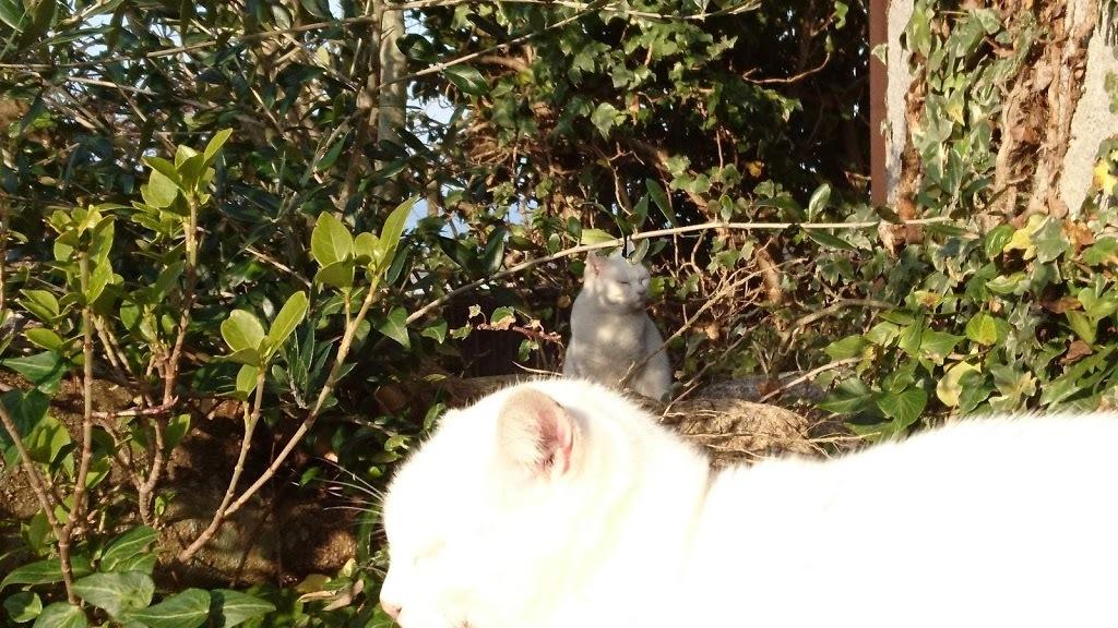 夕方4:45の猫さんたち_f0197985_22190655.jpg