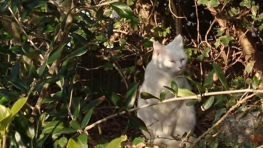 夕方4:45の猫さんたち_f0197985_22190986.jpg