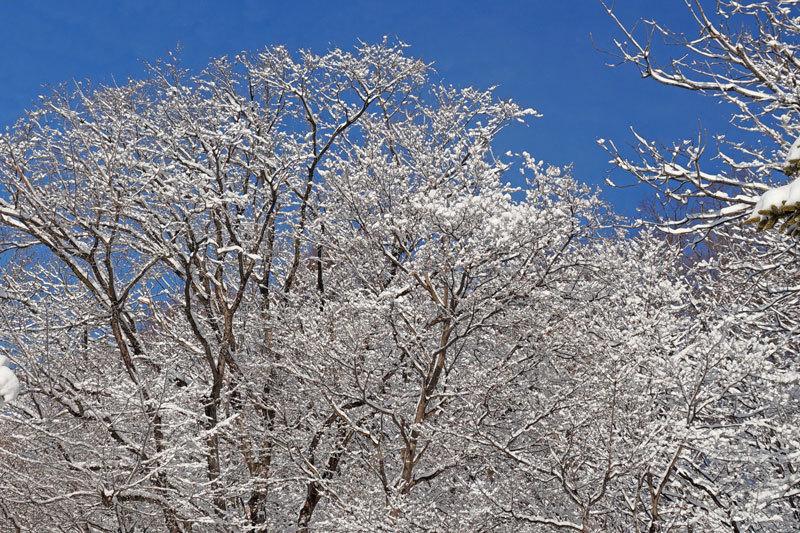 わた雪_d0162994_09122035.jpg
