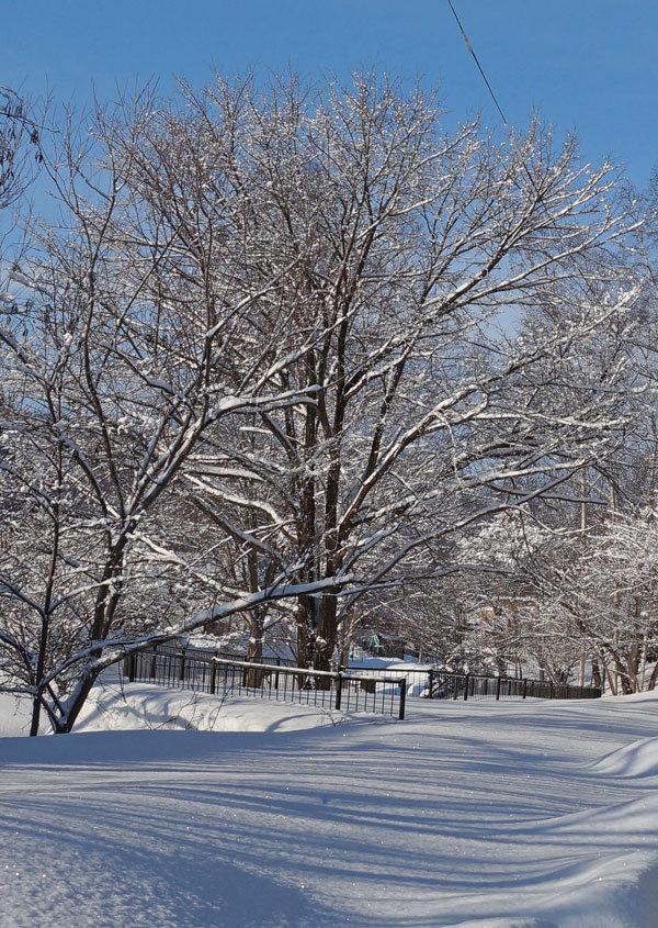 わた雪_d0162994_09124378.jpg