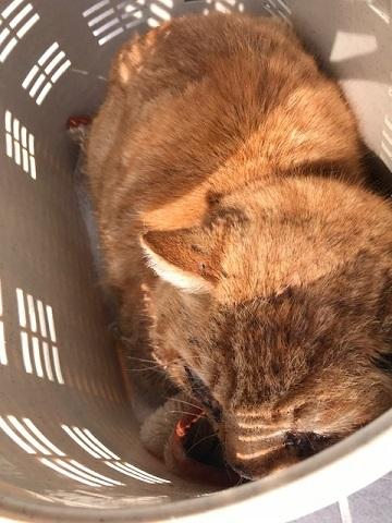 負傷の茶トラくんは入院しました_f0242002_18103246.jpg