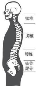 体を整えるために柔軟性を高める(準備運動⑩)_d0358103_18561181.jpg