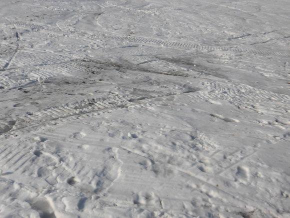令和2年2月25日(火)天気/晴 気温/-1℃ 積雪/20㎝ 一部滑走可能_e0306207_08421830.jpg