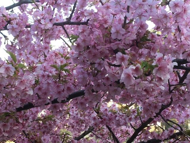 咲くや木の花  藤野早苗_f0371014_01460109.jpeg