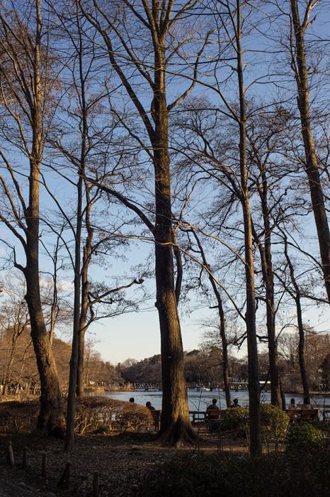 東独逸レンズで歩く井の頭公園 その3(FLEKTOGON 2.4/35 MC)_b0058021_20380050.jpg