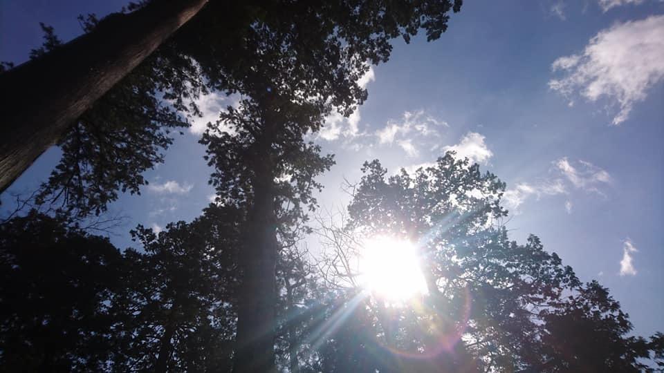 椿大神社へ行ってきました_f0373339_12231995.jpg
