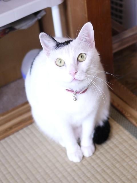 猫のお留守番 たらくん編。_a0143140_23494103.jpg