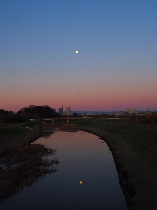 河津桜にメジロ Ⅱ_d0290240_13535141.jpg