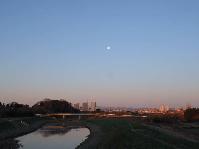 河津桜にメジロ Ⅱ_d0290240_13542170.jpg
