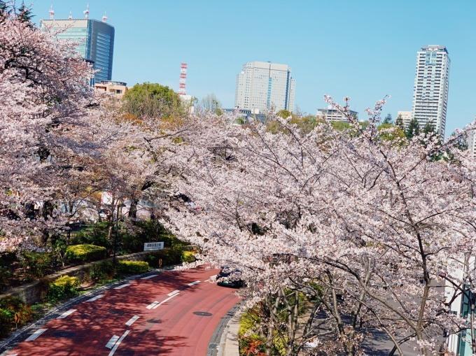 桜_d0010742_23395738.jpg