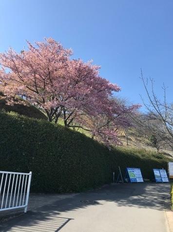 藤枝 蓮華寺池公園へ_b0208246_09072067.jpg