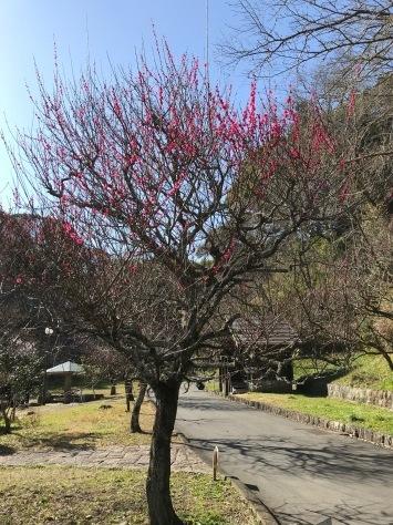 藤枝 蓮華寺池公園へ_b0208246_09072604.jpg