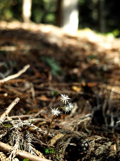 針畑の春告げ、花や山菜・・・そして、スギ花粉_d0005250_17382157.jpg