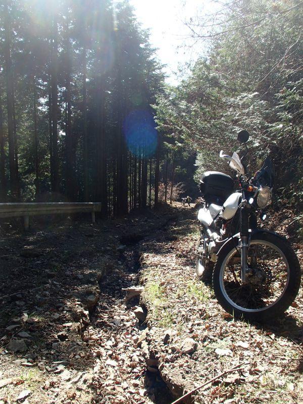 檜原村方面の林道現地調査_f0119755_16085188.jpg