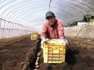 熊本産大津甘藷『からいも(サツマイモ)』 令和2年の栽培スタート!まずは種まきです!(前編)_a0254656_17194372.jpg