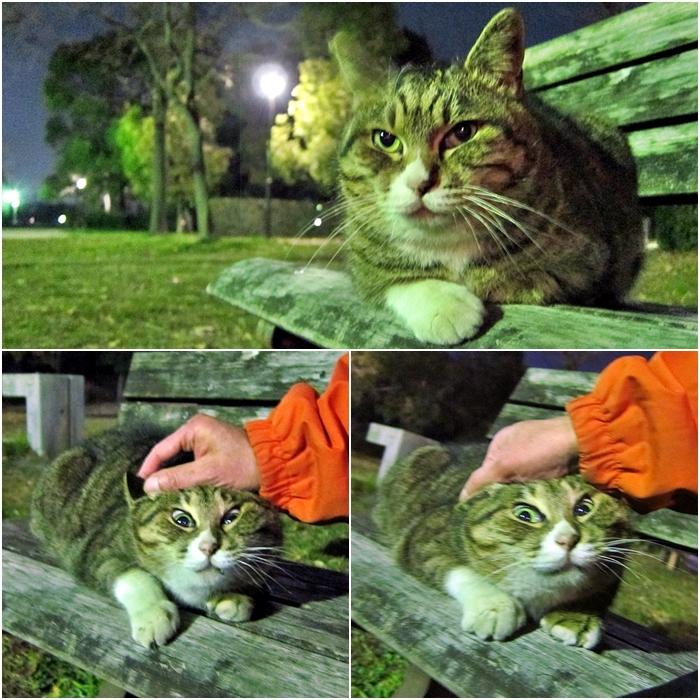 222day(猫の日)_c0074067_05581937.jpg
