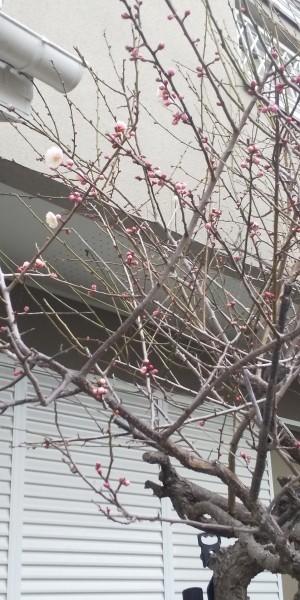 🌸 春の香りが 😊 木曜日から総括質問 📝 黒田は金曜日の2番目です 📝_f0061067_22274286.jpg