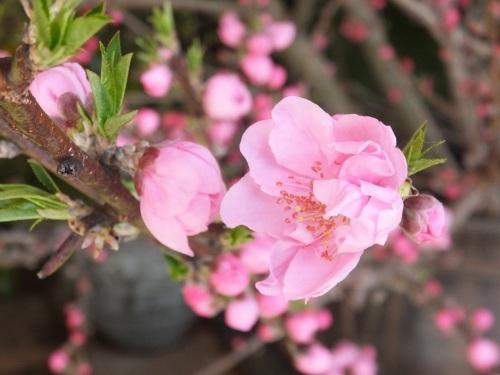 花便り_f0040201_18125654.jpg