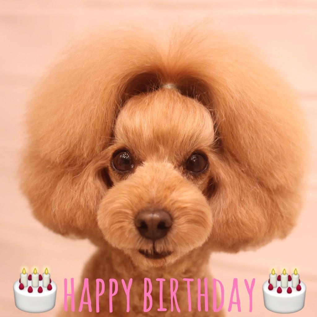 ☆ Happy Birthday ・ ニコちゃん ☆_d0060413_18261771.jpg
