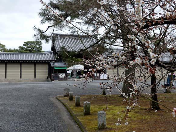 京都御苑も花がスタート_e0048413_20394754.jpg