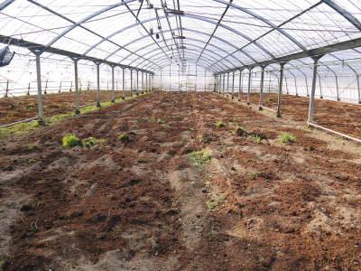 樹上完熟の朝採りトマト 令和2年度の栽培に向け土つくり始めました!今年はキュウリと2本立てです!!_a0254656_17315675.jpg