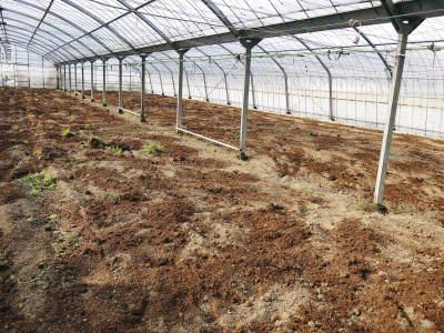 樹上完熟の朝採りトマト 令和2年度の栽培に向け土つくり始めました!今年はキュウリと2本立てです!!_a0254656_17464839.jpg