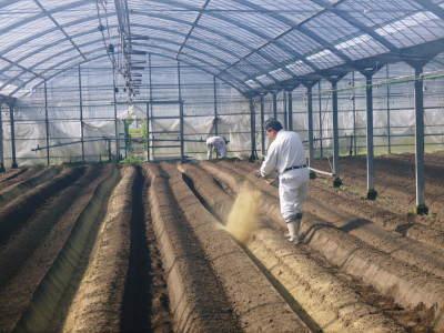 樹上完熟の朝採りトマト 令和2年度の栽培に向け土つくり始めました!今年はキュウリと2本立てです!!_a0254656_17484468.jpg