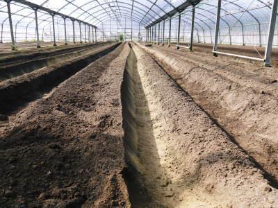 樹上完熟の朝採りトマト 令和2年度の栽培に向け土つくり始めました!今年はキュウリと2本立てです!!_a0254656_17494683.jpg