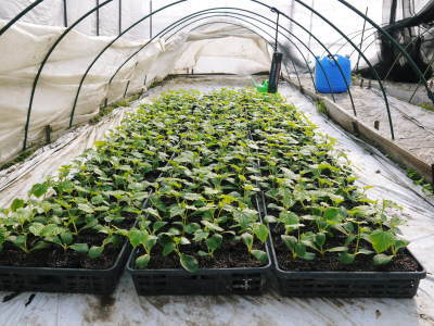 樹上完熟の朝採りトマト 令和2年度の栽培に向け土つくり始めました!今年はキュウリと2本立てです!!_a0254656_17543289.jpg