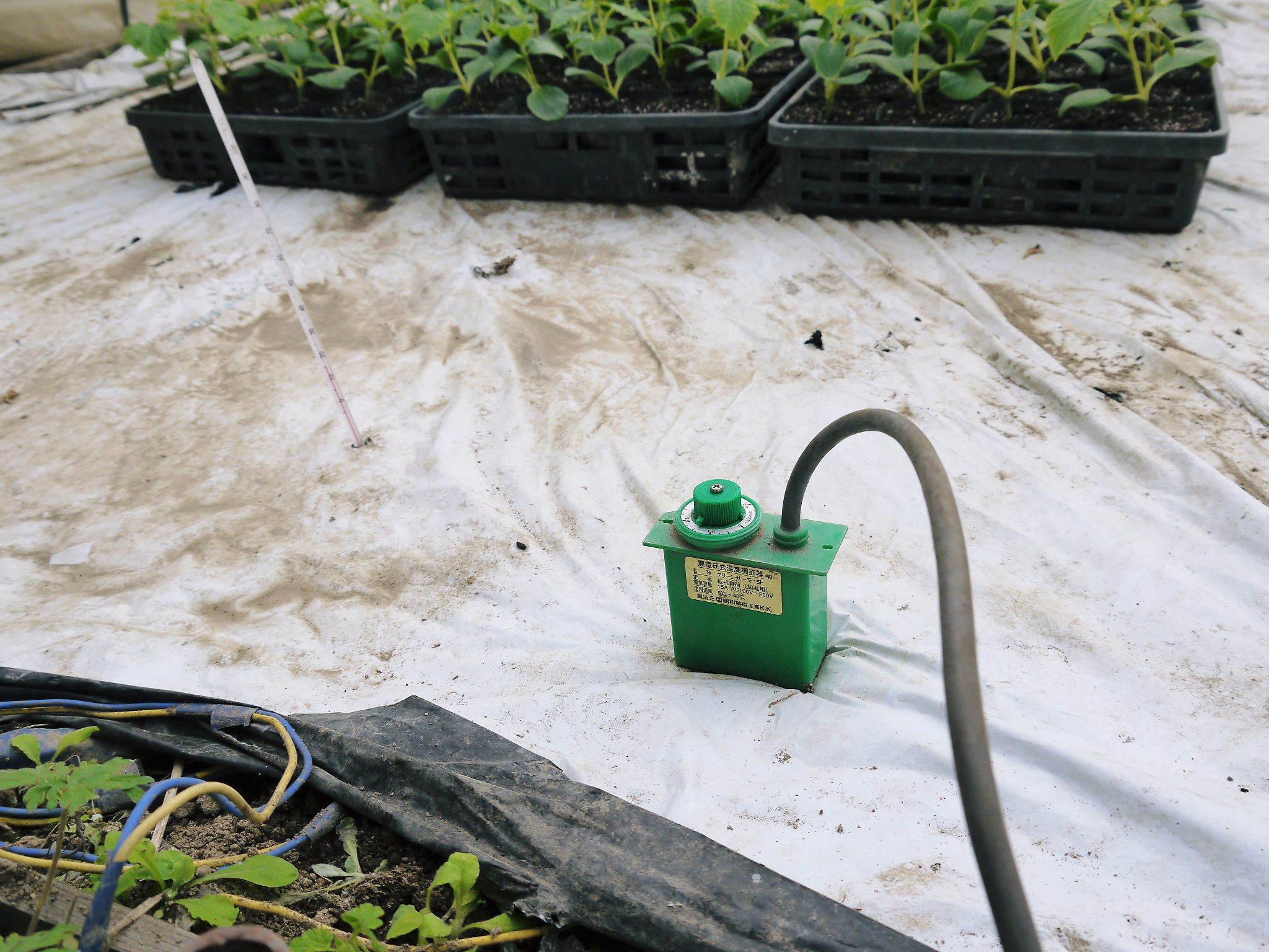 樹上完熟の朝採りトマト 令和2年度の栽培に向け土つくり始めました!今年はキュウリと2本立てです!!_a0254656_18081393.jpg