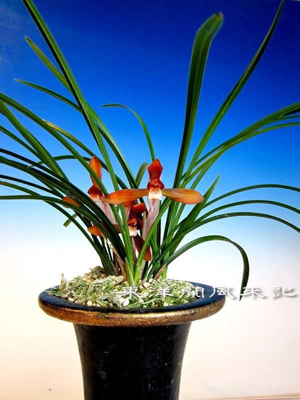 朱粋紅                            No.2011_d0103457_23232674.jpg