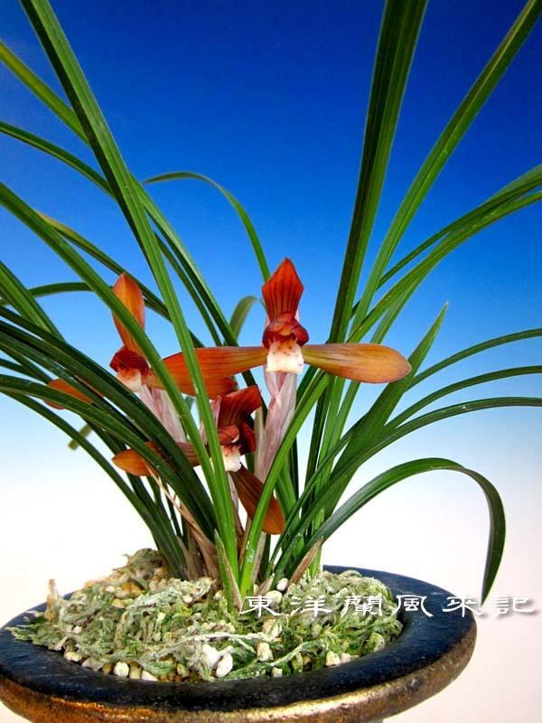 朱粋紅                            No.2011_d0103457_23234525.jpg