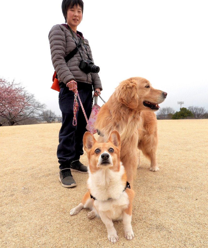サクラヒヨとサクラワンちゃん_c0305565_17434124.jpg