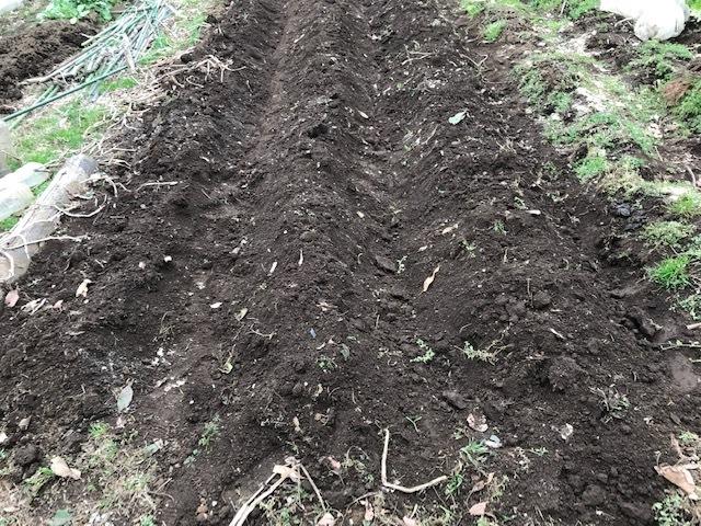 3種類のサトイモの種芋植え付け2・25_c0014967_12404598.jpg