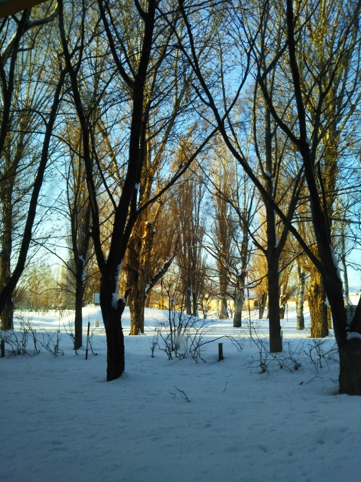 除雪有り難う_e0104567_09554338.jpg