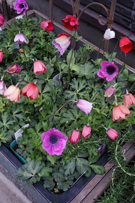 オークリーフ(紫色の花たち)_f0049672_18371425.jpg