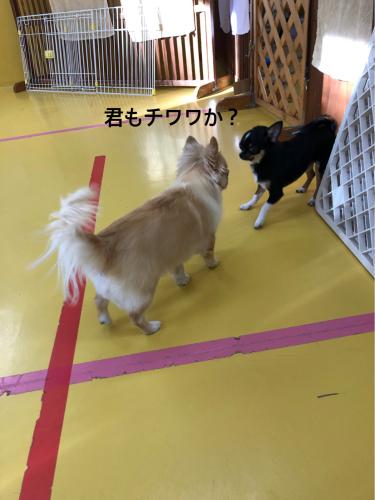 保育園ブログ_f0357682_18075063.jpg