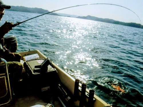 船釣りして刺身_d0195183_22035290.jpg