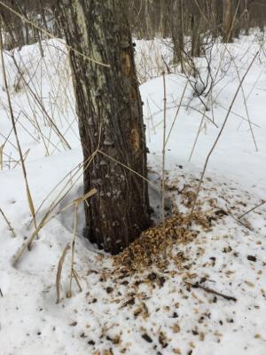 雪の上に落っこちてるもの探し?_a0096989_11172057.jpg