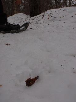 「冬のフィールドはあっちの世界が見える!」_a0096989_14094155.jpg
