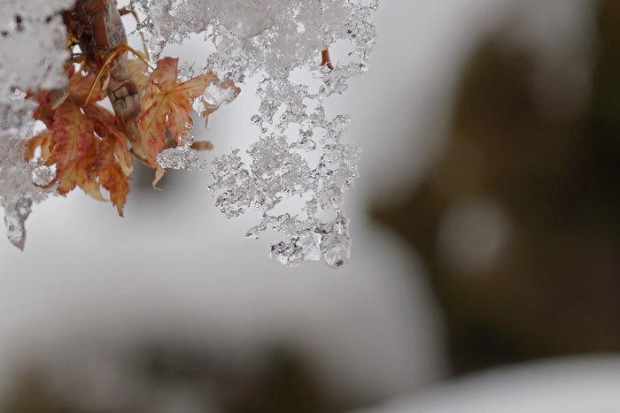 氷の模様_d0162994_08514756.jpg