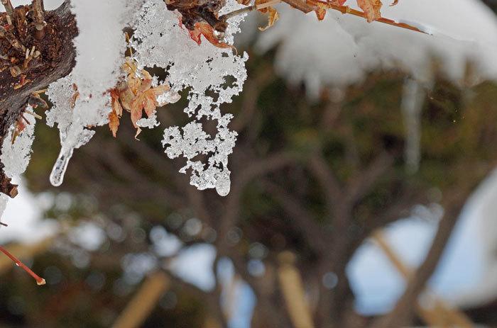氷の模様_d0162994_08515914.jpg