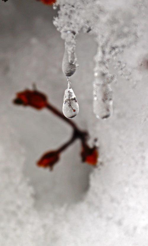氷の模様_d0162994_08524220.jpg