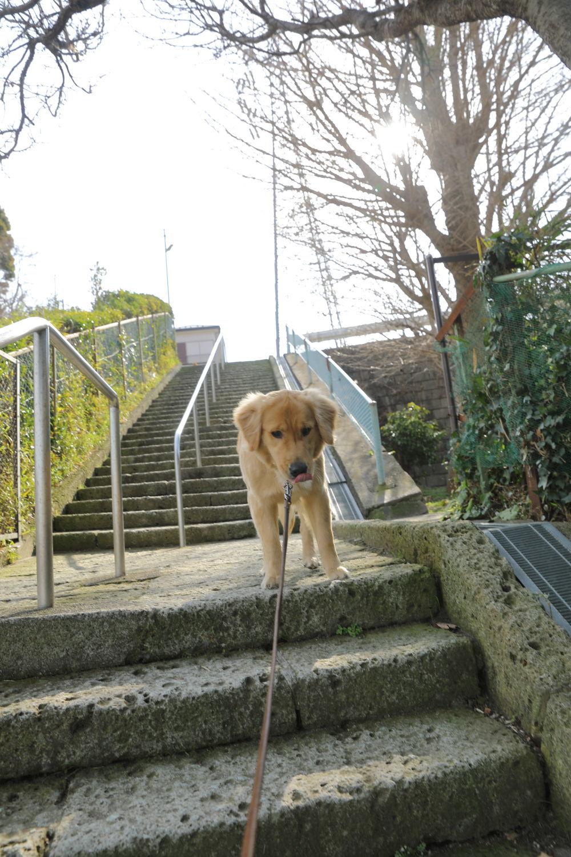 小雨のお散歩♪_b0275998_11052803.jpg