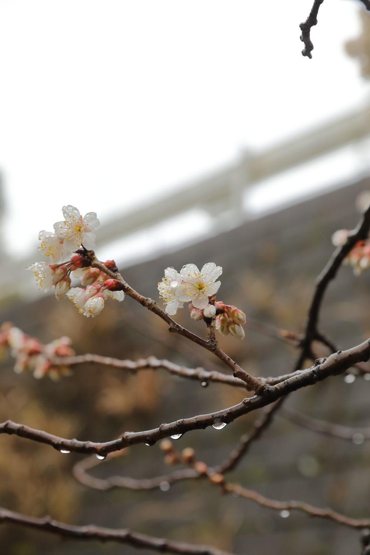 小雨のお散歩♪_b0275998_11331119.jpg